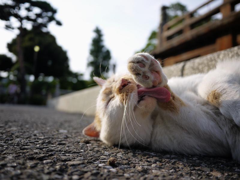 顔の前の手を舐める猫