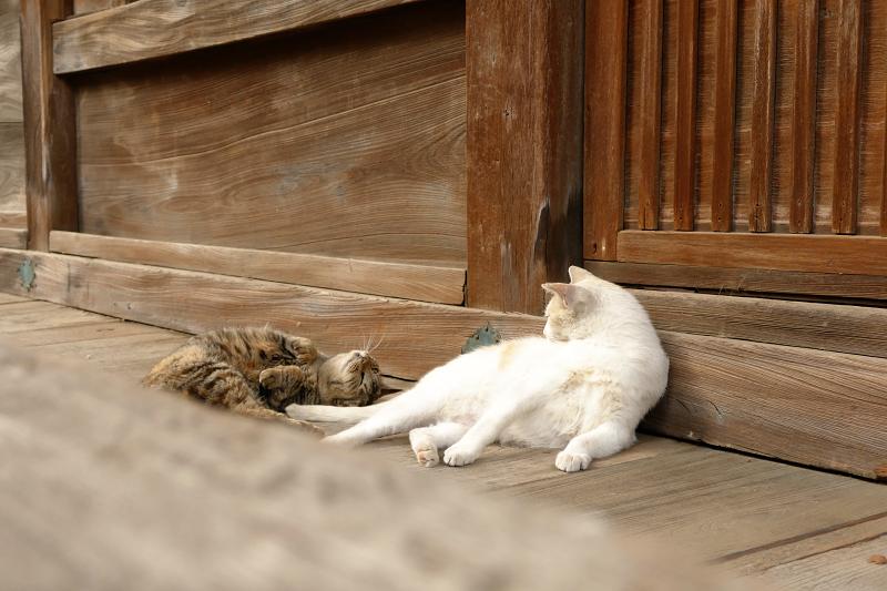 お堂の裏の猫2匹2