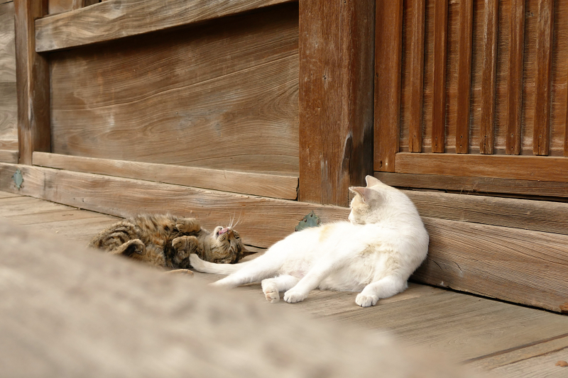 お堂の裏の猫2匹3
