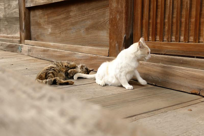 お堂の裏の猫2匹4