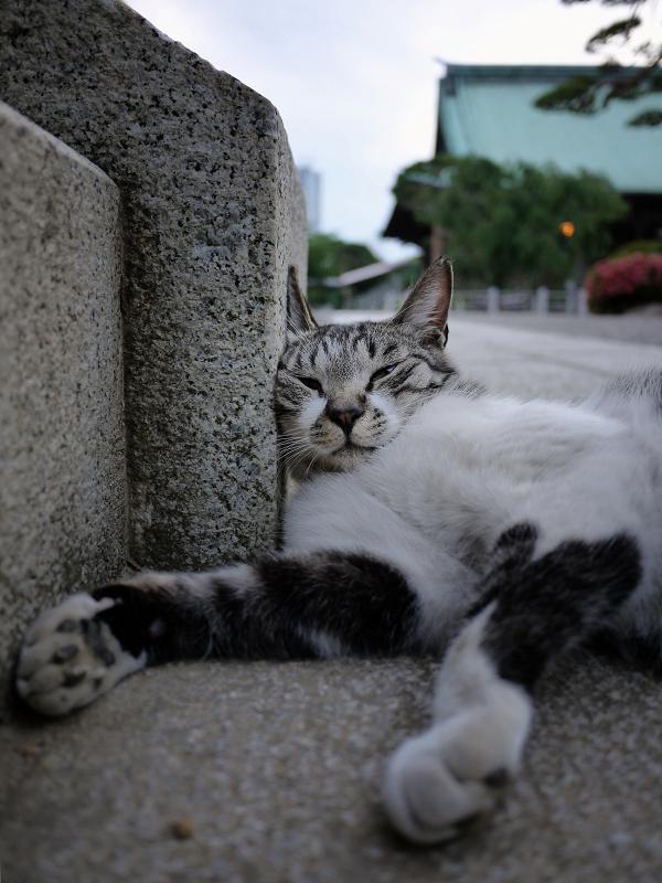 90度の角度の猫2