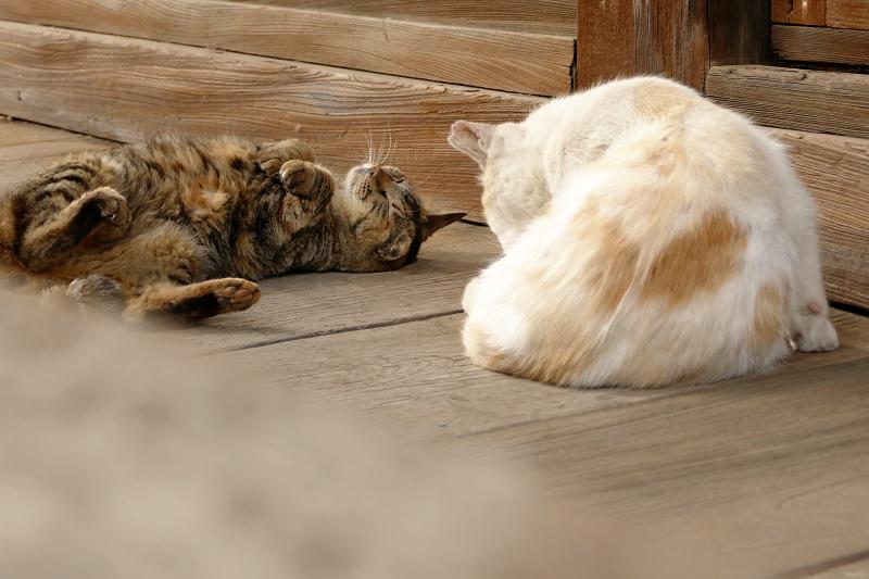 お堂の裏手の猫2匹1