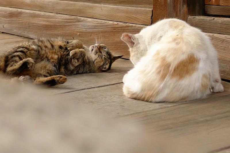 お堂の裏手の猫2匹2