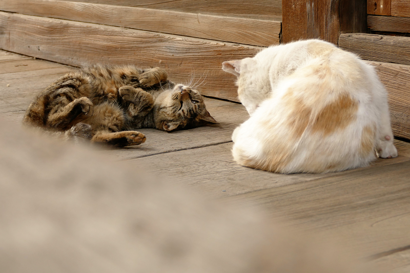 お堂の裏手の猫2匹3