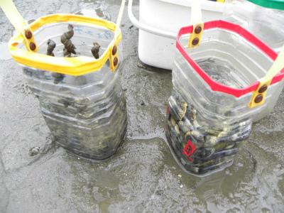 貝の浄化実験