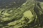 5.水藻-01D 0908q