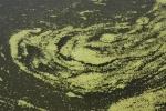 6.水藻-02D 0908q