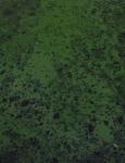12.水藻-09D 1306qt