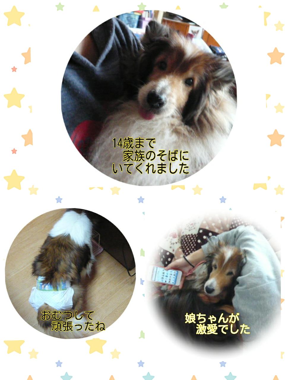 2015-07-09-13-40-46_deco.jpg
