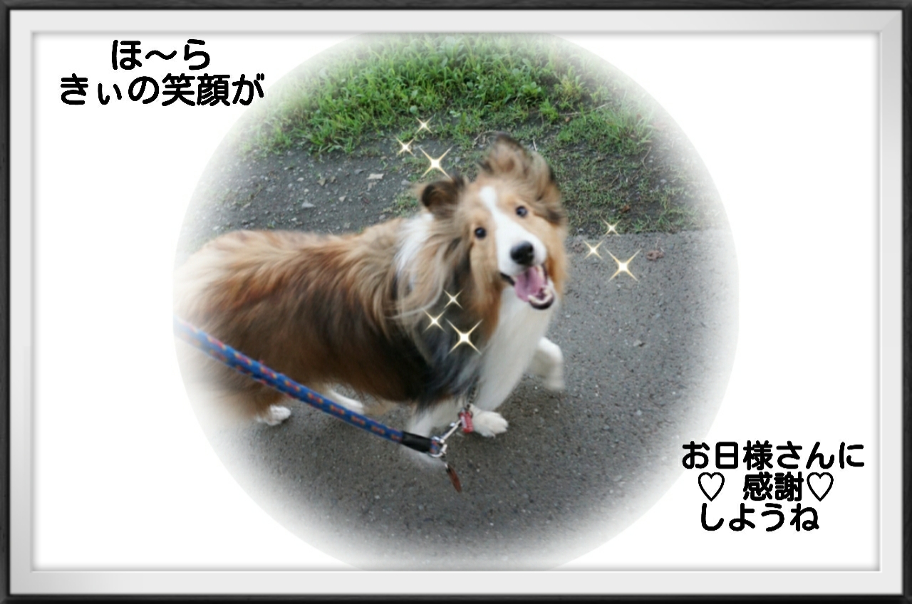 2015-07-11-02-49-30_deco.jpg