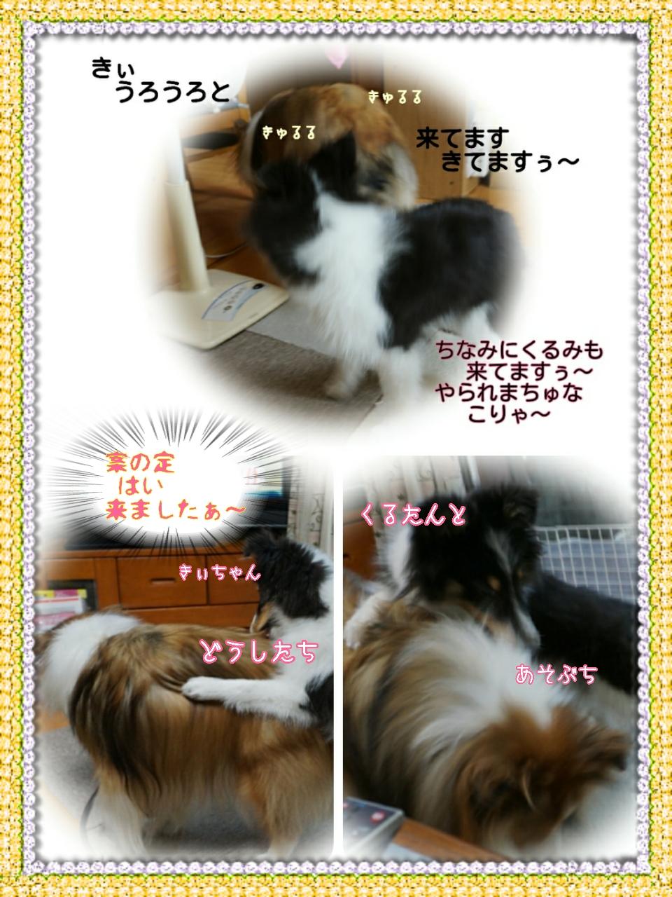 2015-07-30-12-21-58_deco.jpg