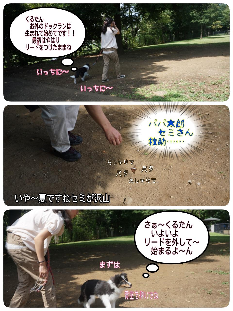 2015-08-09-15-53-33_deco.jpg