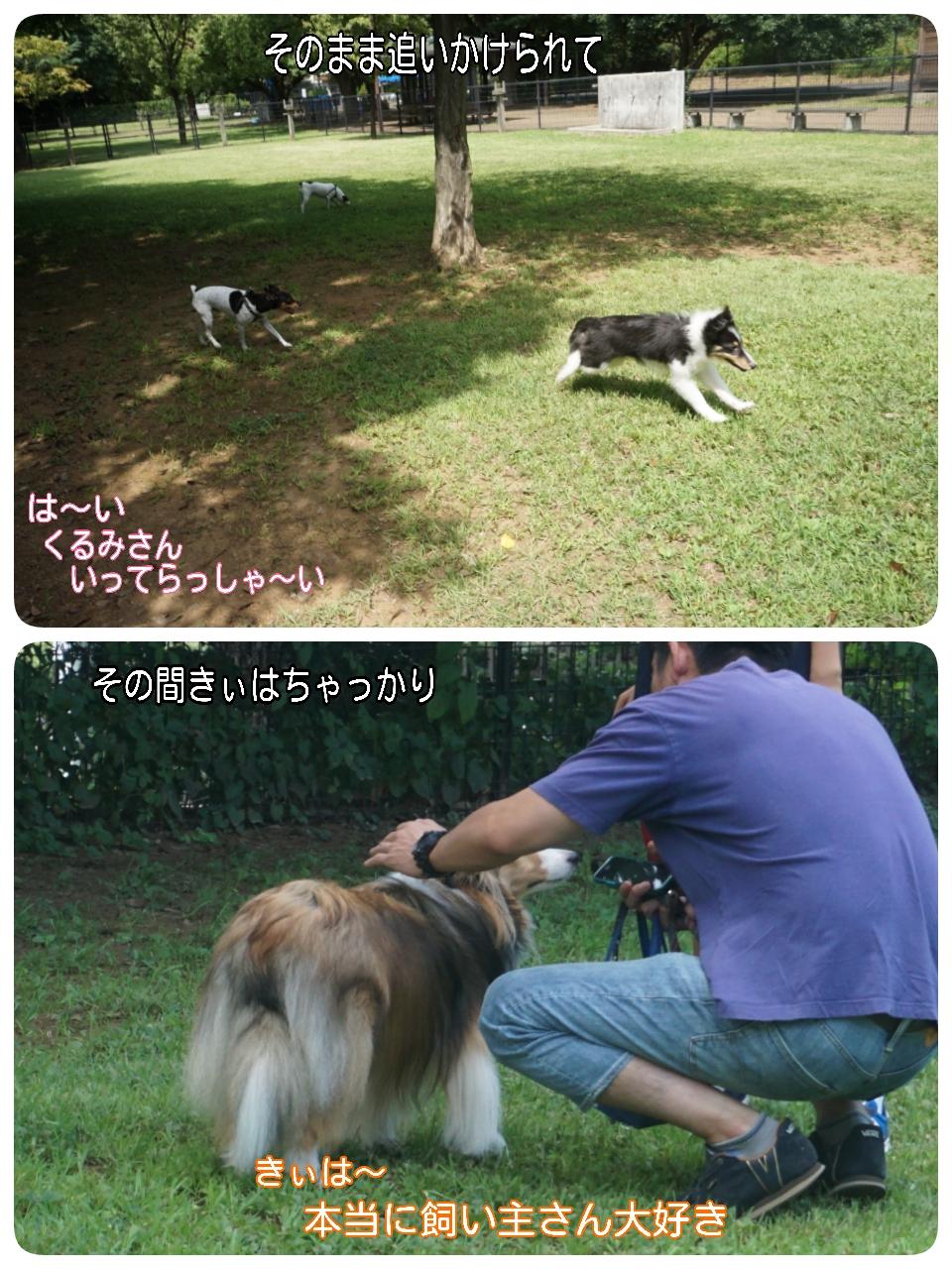 2015-08-09-16-53-13_deco.jpg