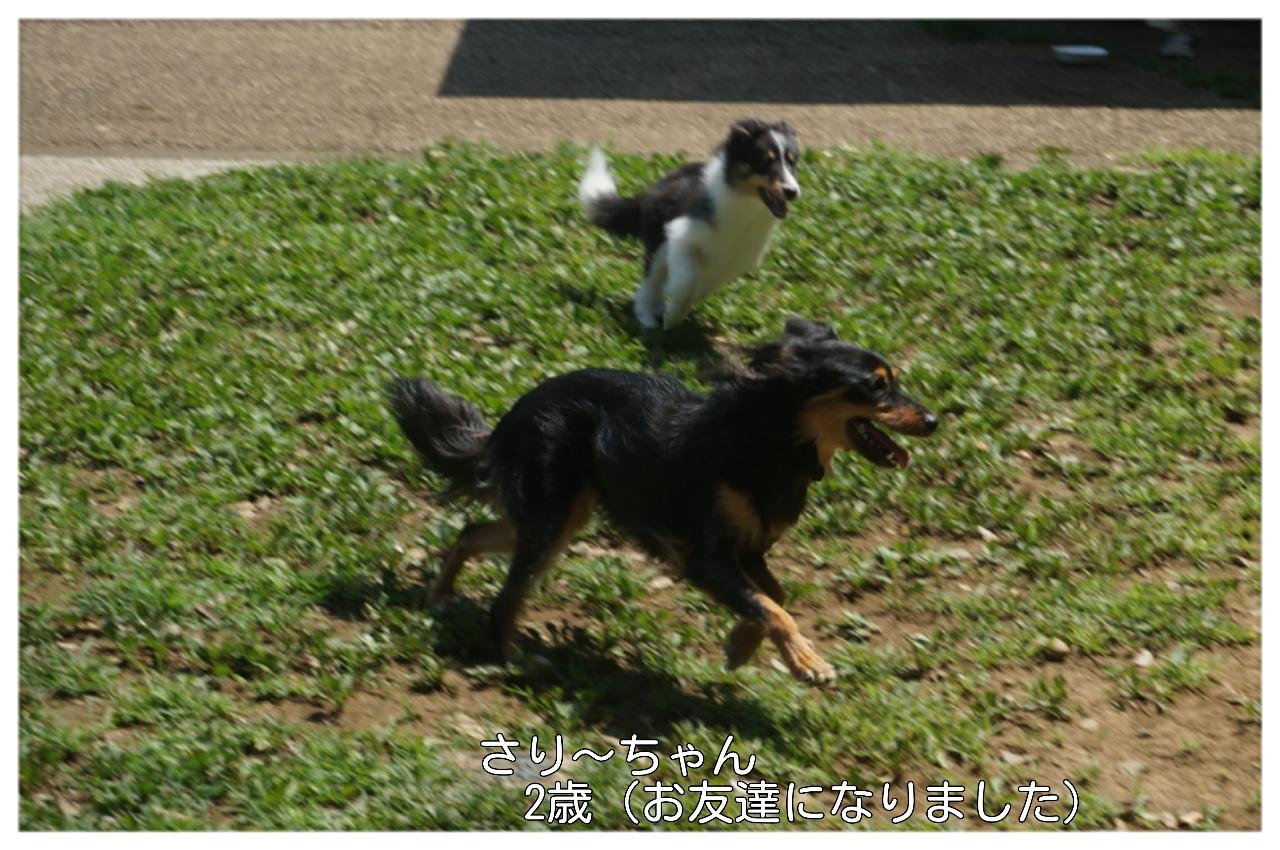2015-08-09-17-00-22_deco.jpg