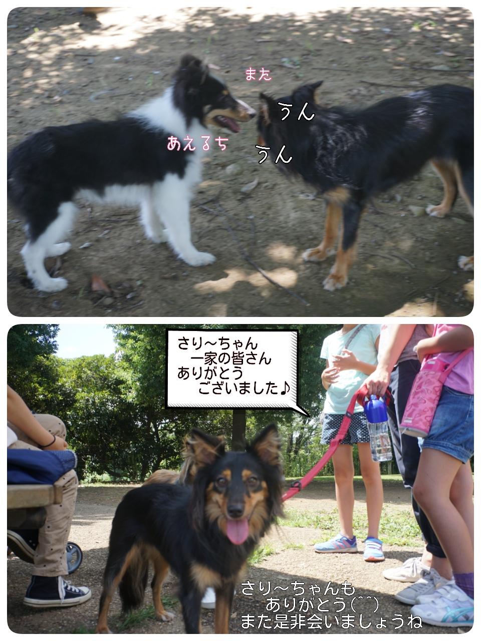 2015-08-09-17-12-36_deco.jpg