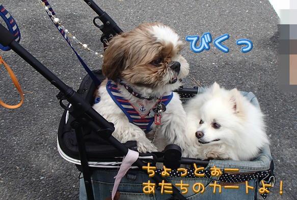 12_20150606210110ce4.jpg