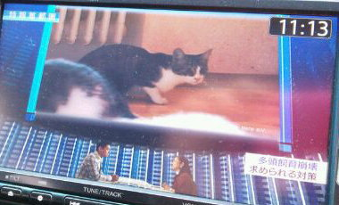 NHK特報首都圏のテレビ画面