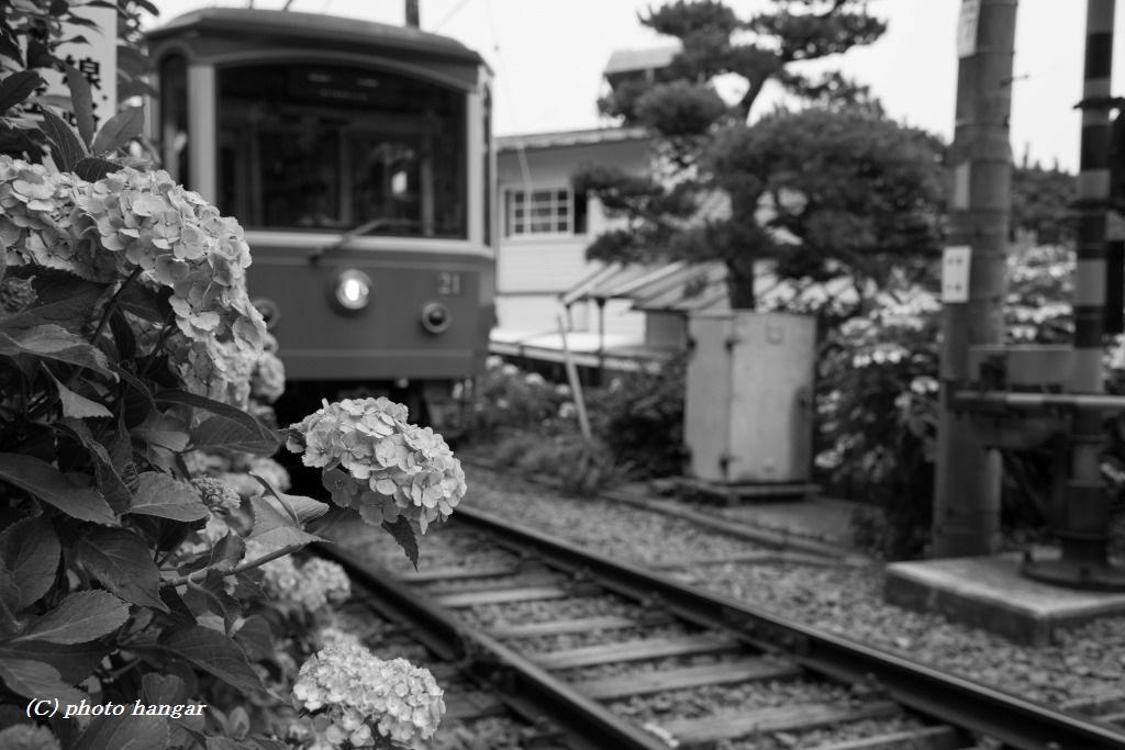 かまくら電鉄 線路脇 20140627 0102