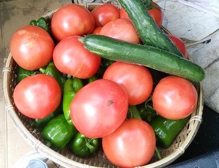収穫2015.07.19-1