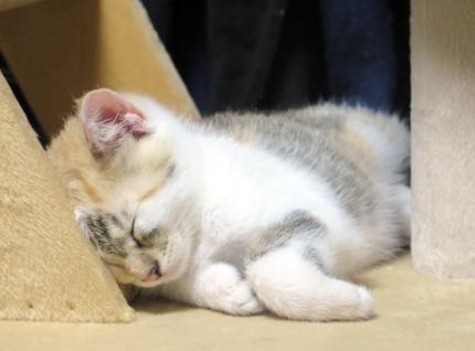 150616_cat03.jpg