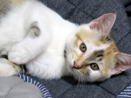 150718_cat02.jpg
