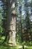五重塔と爺杉、羽黒山