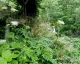 白竜の滝1