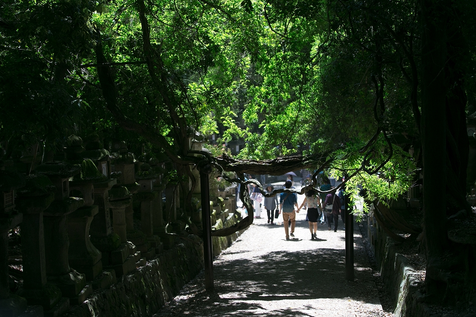 GW東大寺は京都並み-50