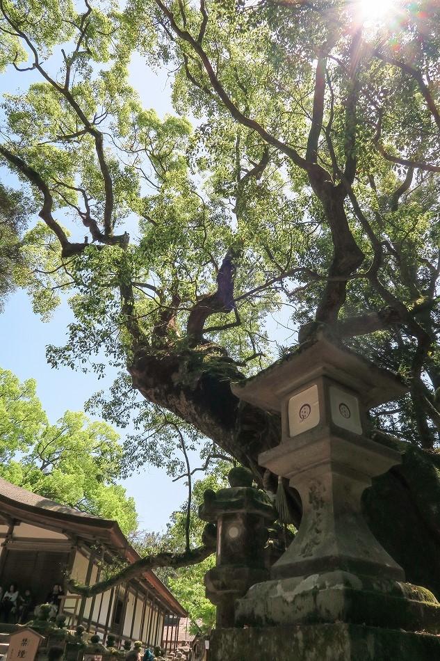 GW東大寺は京都並み-48