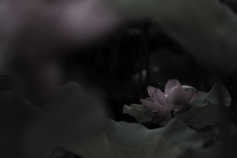 花はす-10