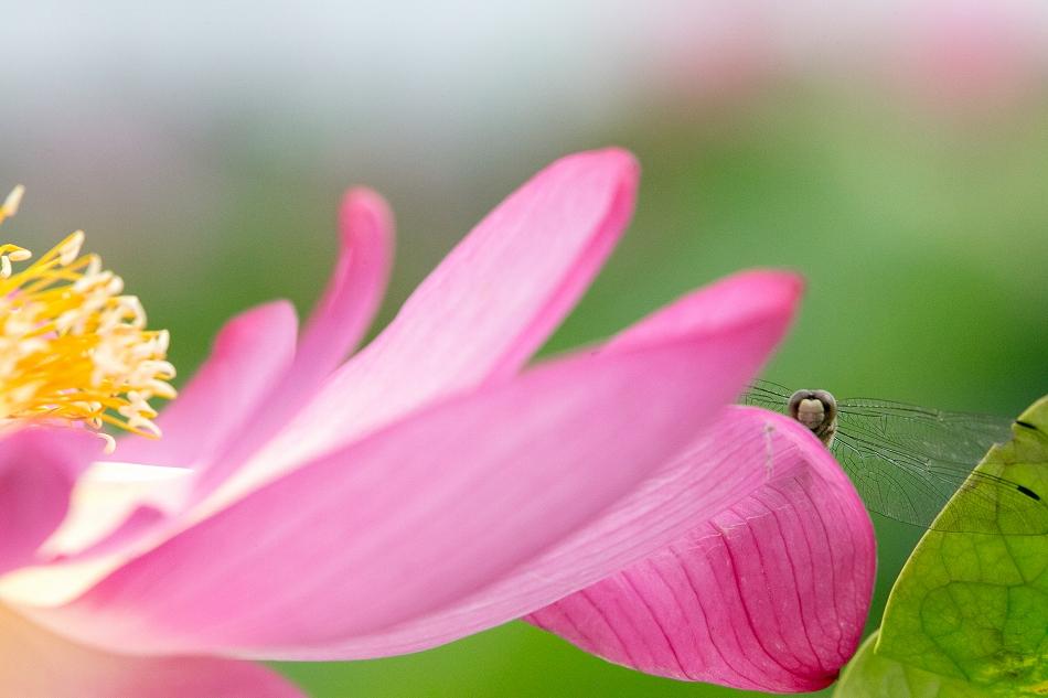 花はす-35