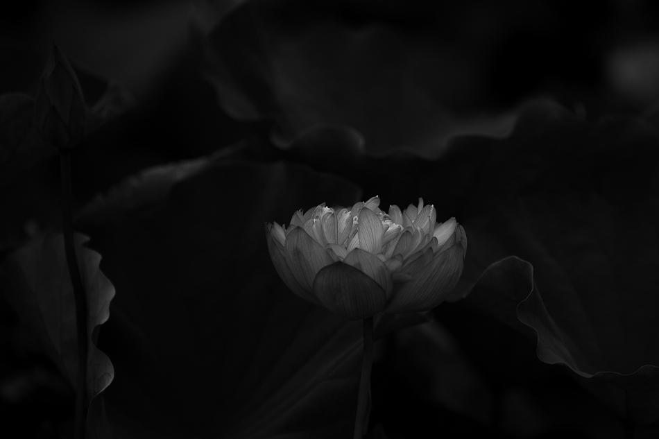 花はす-60