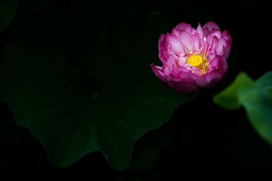 花はす-59