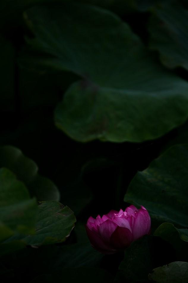 花はす-58