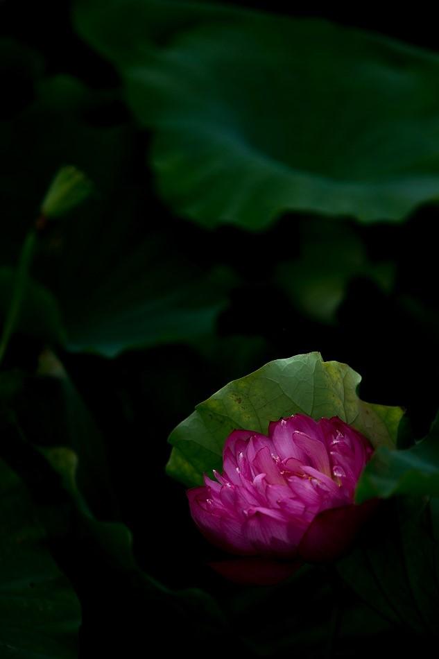 花はす-57