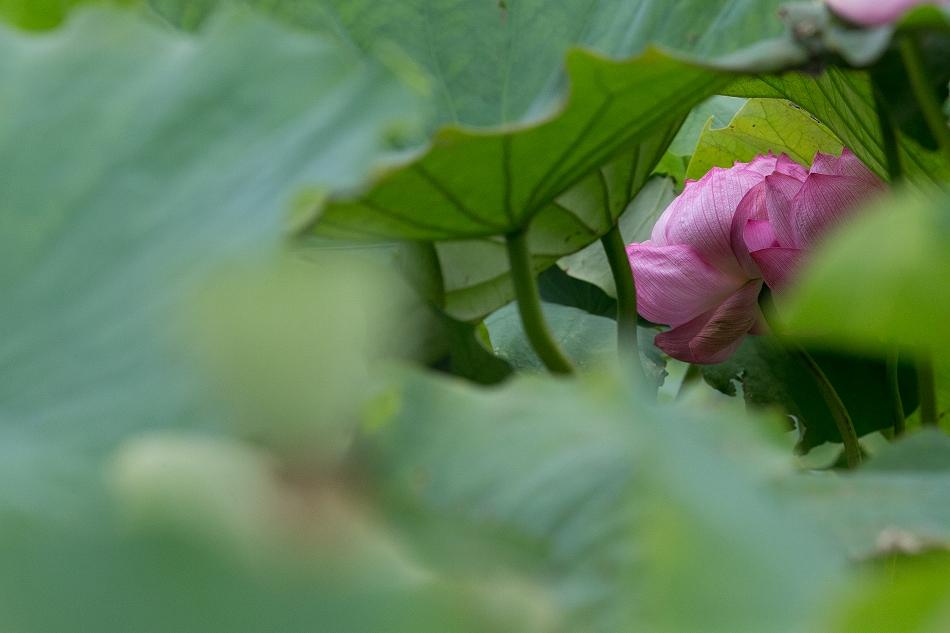 花はす-56