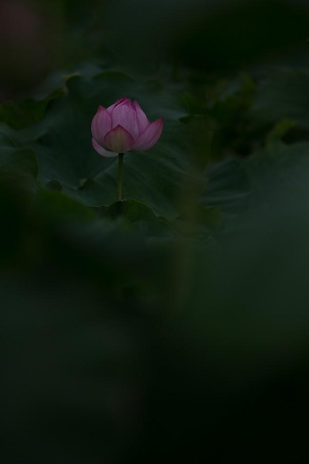 花はす-55