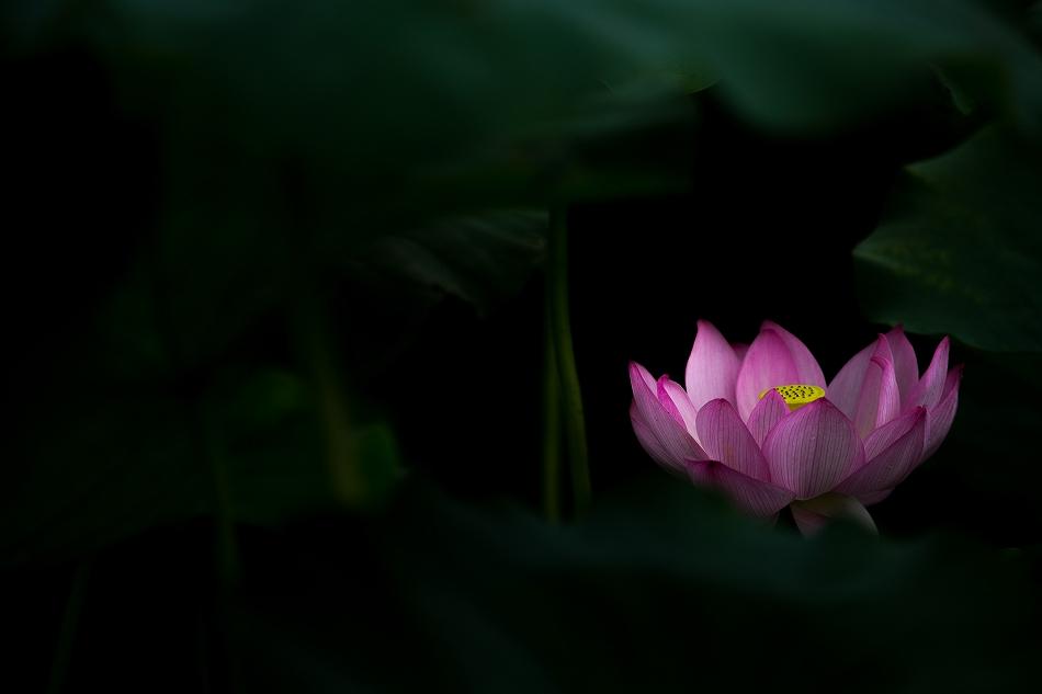 花はす-53