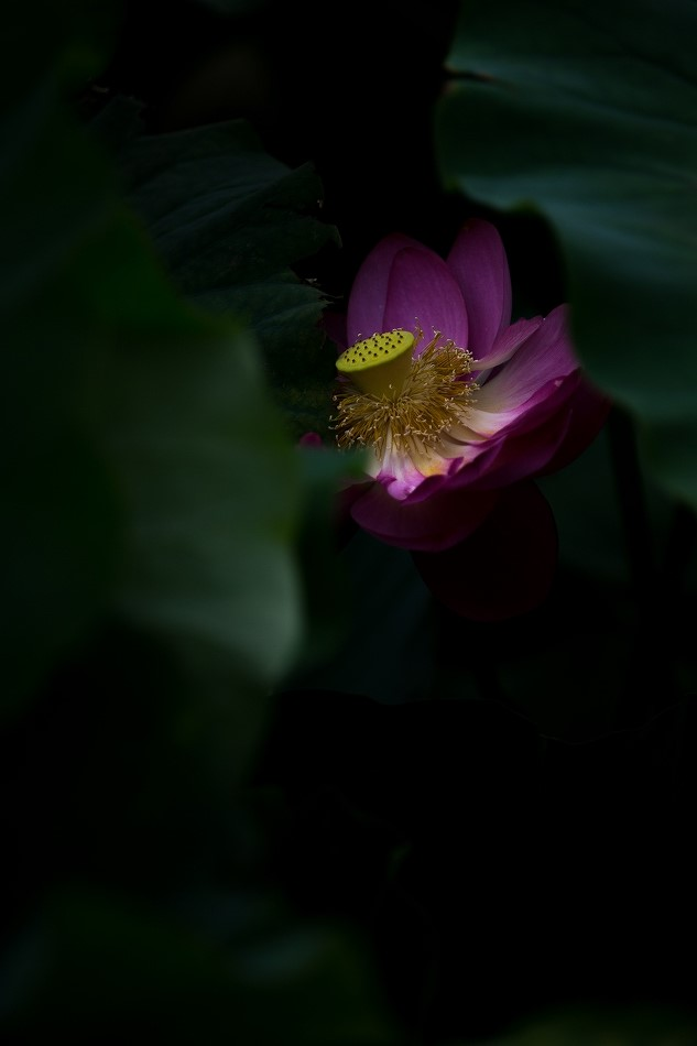 花はす-52