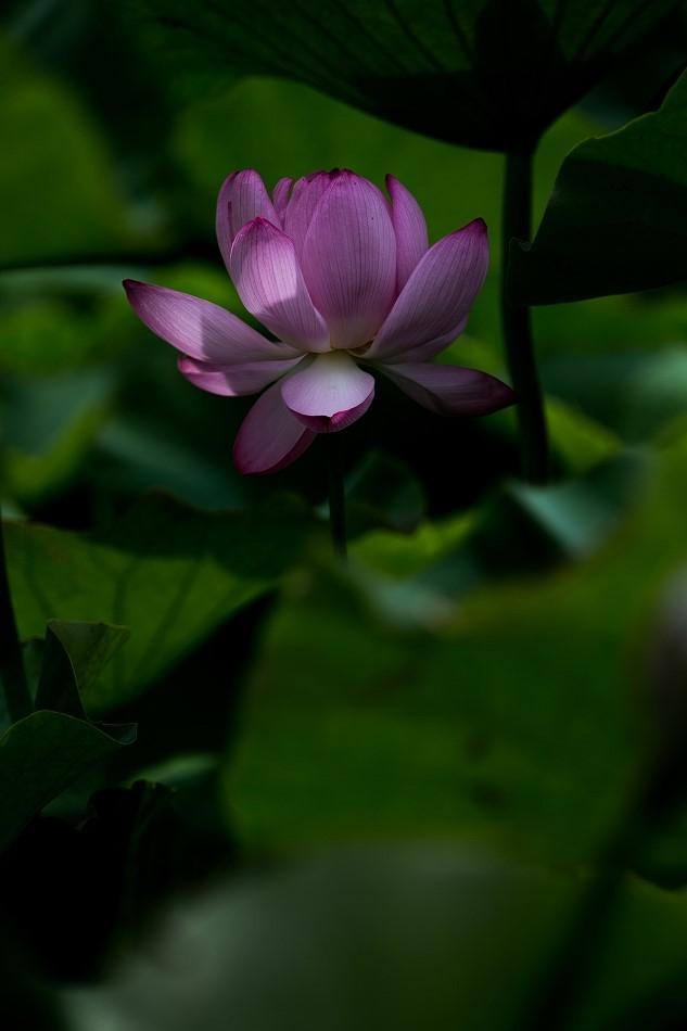 花はす-51