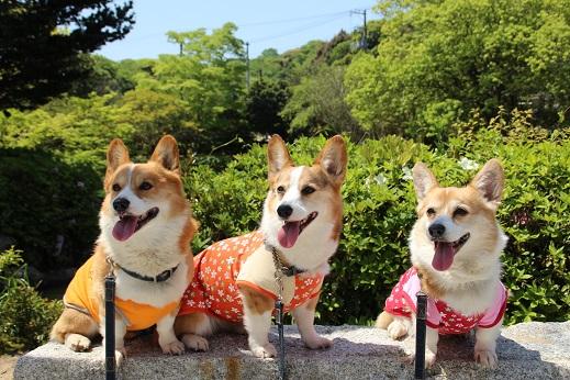 東行庵と跡地 2015-4-29-1