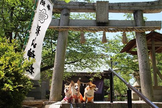 桜山神社 2015-4-29-3