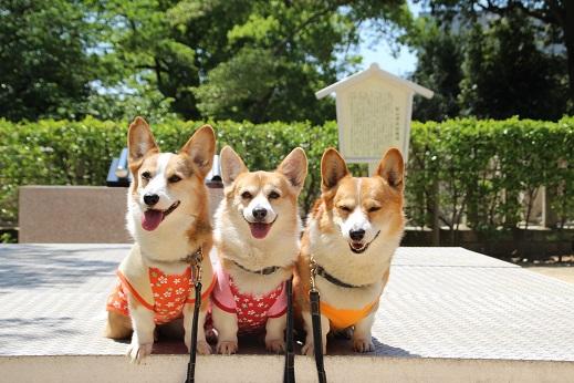 桜山神社 2015-4-29-9