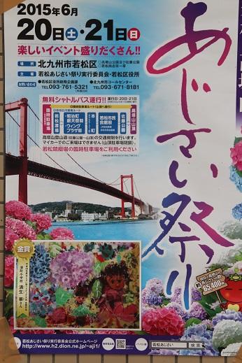 紫陽花1 2015-6-13-4