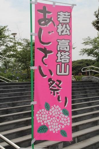 紫陽花2 2015-6-13-1