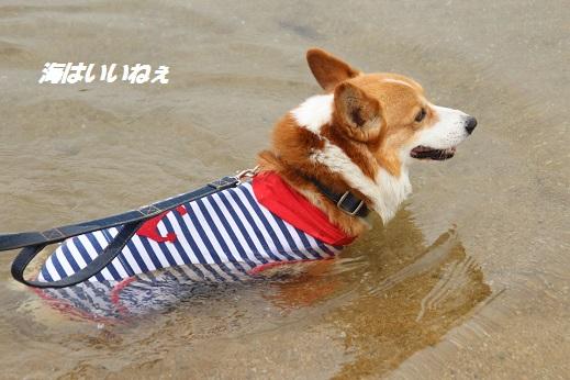 汐入の里 2015-6-13-1