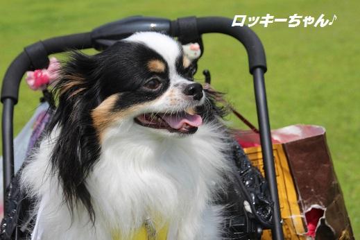 お友達編 2015-6-21-3