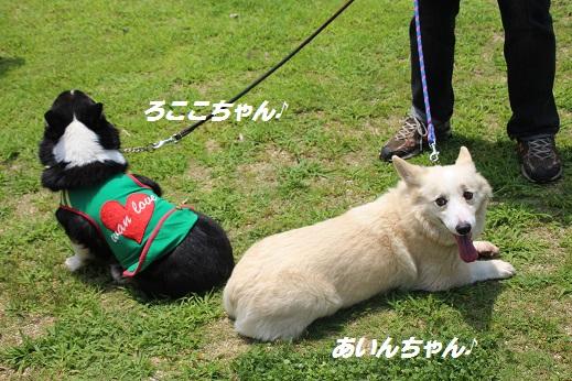 お友達編 2015-6-21-7
