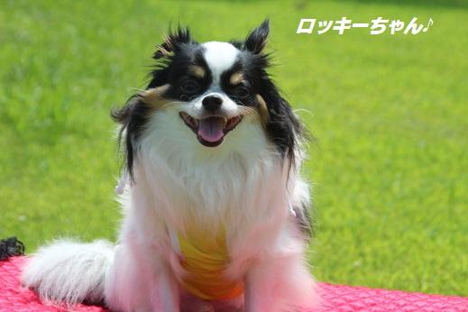 撮影編 2015-6-21-2