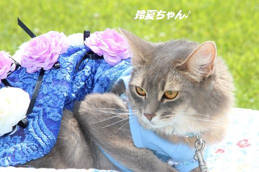 撮影編 2015-6-21-4